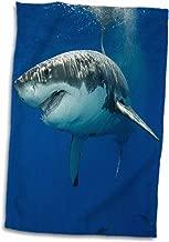 """vwpics Sharks من 3dRose–رائعة القرش الأبيض ، carcharodon carcharias ، جزيرة غوادالوبي ، المكسيك الشرقية ، المحيط الهادئ–منشفة, White, 15"""" x 22"""""""