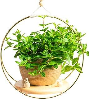 THSGRT ボヘミアン ハンギング プランター 3サイズ モダン マクラメ プラント ハンガー 植物 木製シェルフ ハンドメイド コットン ロープ 植物ハンガー 壁 天井 屋内 屋外 ホームデコ (植物は含まれません) (ミディアム)