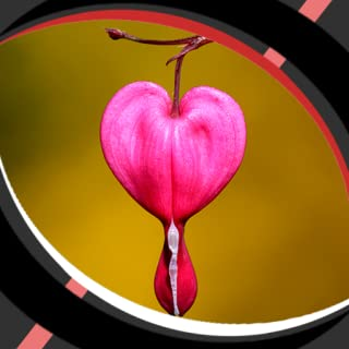 Live Wallpapers Romantic Heart