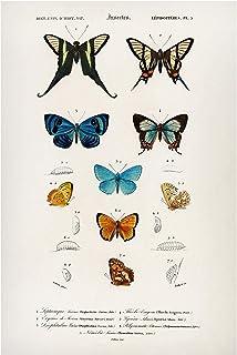 Pizarra magnética - Vintage Board Butterflies I 90x60cm