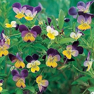 Burpee Johnny-Jump Up Viola Seeds 300 seeds