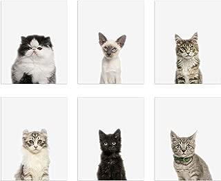 Best cute cat portrait Reviews