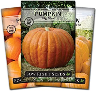 Sow Right Seeds - Pumpkin Seed Collection for Planting - Big Max, Connecticut Field, and Small Sugar Pumpkins. Non-GMO Hei...