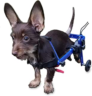 Best toy dog on wheels with lead Reviews
