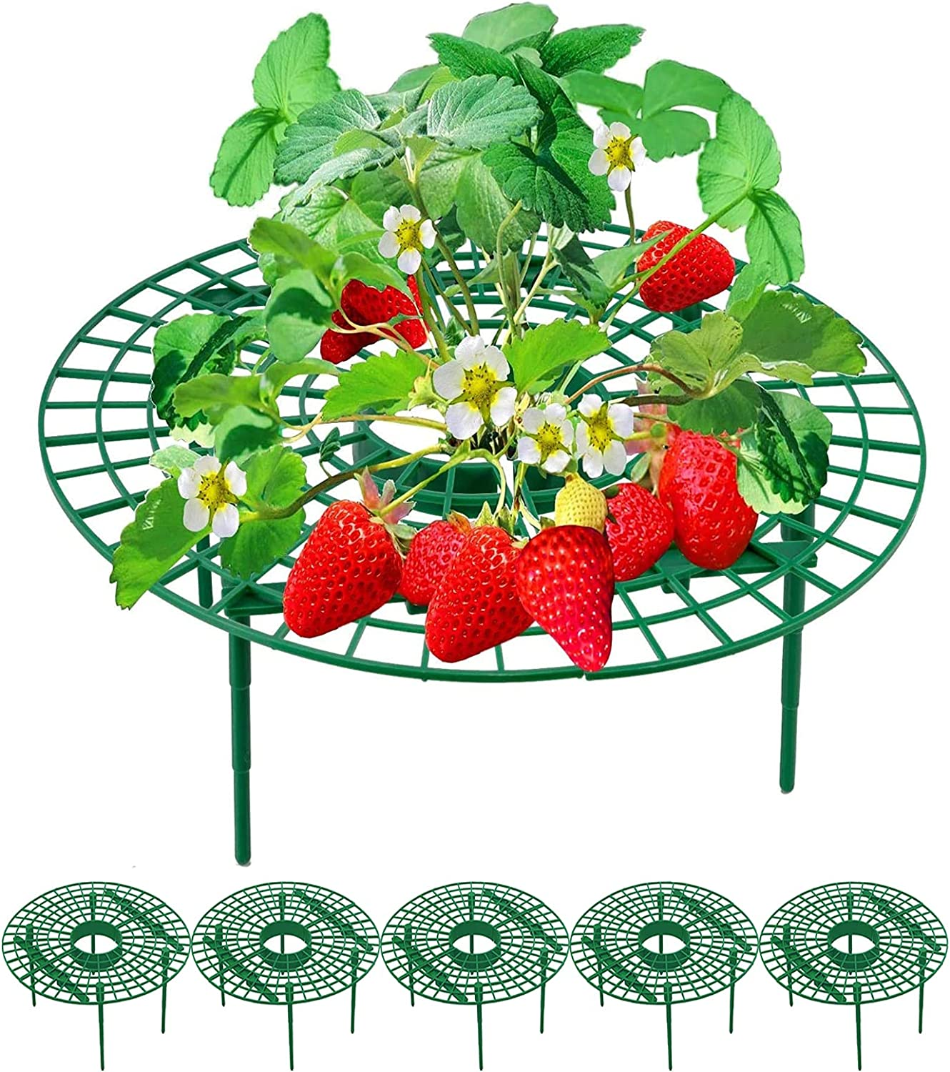 5 Packs Strawberry Plant Stand Japan's largest assortment Supports Charlotte Mall