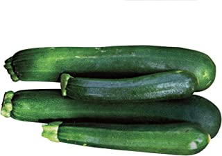 Burpee Black Beauty Zucchini Summer Squash Seeds 100 seeds