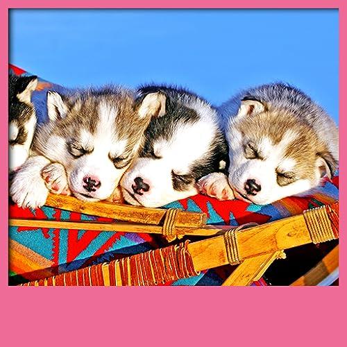 Papéis de Parede de Filhotes de cachorro