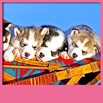 Cute Puppies Live Wallpapers