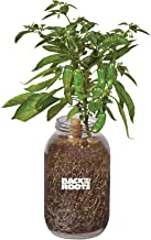 Back to the Roots Self-Watering Shishito Planter, Grow Organic Shishito Peppers Year Round, Windowsill Grow Kit, Top Gardening Gift, Holiday Gift, & Unique Gift