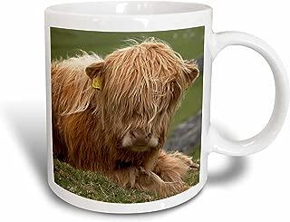3dRose Highland Cow, Farm animal, North Yorkshire, England - David Wall Ceramic Mug, 11-Oz