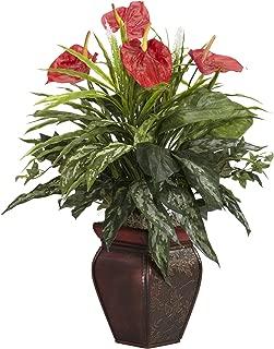 Best anthurium plants for sale Reviews