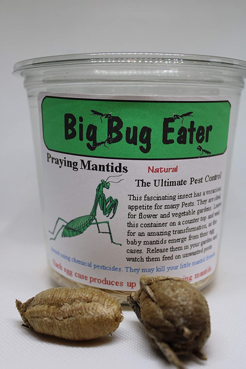 Two Extra Large Praying Mantis Ootheca Egg Cases + Clear Hatching Incubator Kit