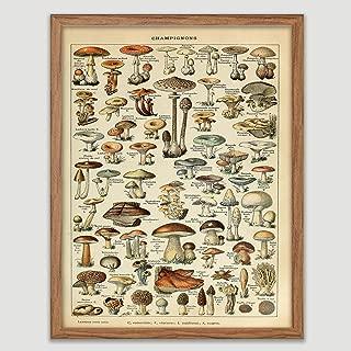 vintage mushroom plates