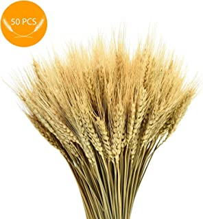 AQUEENLY Wheat Stalks, 50 PCS Natural Dry Wheat Decor for Christmas Wedding Home Office Decoration, 13.7 Inches