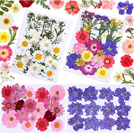 98 Pièces Ensemble de Fleurs Séchées Bricolage Fleurs de Marguerite Séchées Naturelles Fleurs Pressées Mixtes Plusieurs Fleur Sèche Vraie Colorée pour DIY Résine Bijoux Artisanat Ongle Décorations