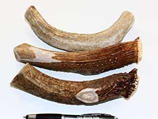 Deer valley dog chews Antler Dog Treats Large 3-Pack Big & Thick/Free Antler Key-Ring Premium Chemical Free shed Deer Treats Texas Made and Guaranteed