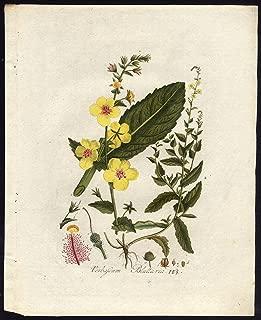 Antique Print-VERBASCUM BLATTARIA-MOTH MULLEIN-103-Flora Batava-Sepp-1800