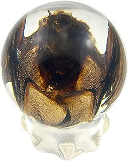 REALBUG Bat Globe Desk Decoration