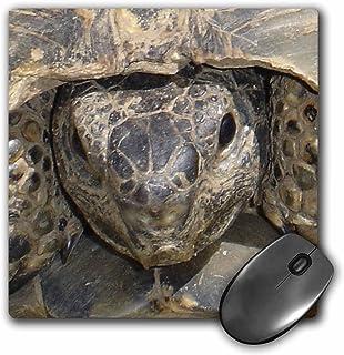3dRose LLC 8 x 8 x 0.25 Inches Tortoise Portrait Animals, Ibera Greek Tortoise, Land Turtles, Reptiles, Testudo Ibera Patt...