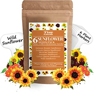 Best seeds that look like sunflower seeds Reviews