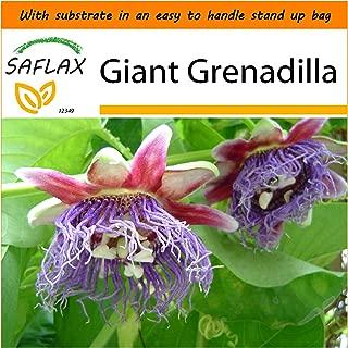 SAFLAX - Garden in the Bag - Giant Grenadilla - 12 seeds - Passiflora quadrangularis