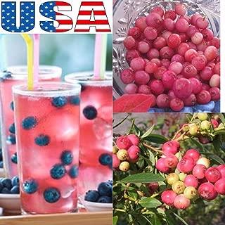 25 Seeds USA Seller Pink Lemon-aid Blueberry 25- Seeds