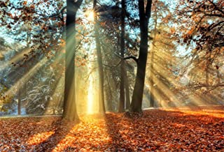 CSFOTO 5x3ft Background for Sunshine Forest Autumn Landscape Photography Backdrop Dreamy Forest Fallen Leaves Shine Beautiful Nature Scene Outdoor Leisure Time Photo Studio Props Vinyl Wallpaper