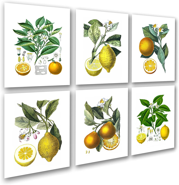 Kitchen Art Decor Set of 6 Unframed Lemon orange Fruit Vintage Botanical Reproduction Art Prints