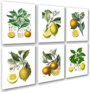 Kitchen Art Decor Set of 6 Unframed Lemon Orange Fruit Vintage Botanical Reproduction Art Prints