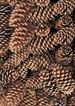 Afloral Box of 100 Natural Medium Pine Cones - 3-5