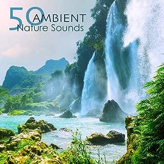 Best pan flute sound effect Reviews