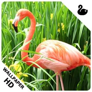Best flamingo lock screen Reviews