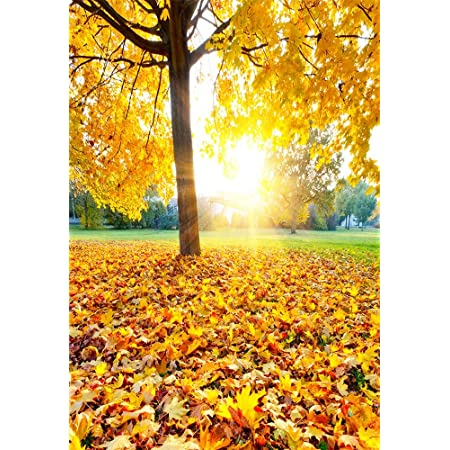 SZZWY 5X7FT Vinyl Thin Backdrop Photography Background Autumn Maple Trees Small Path House Fallen Leaves Scenery Backdrop for Photo Studio Props 1.5x2.2M