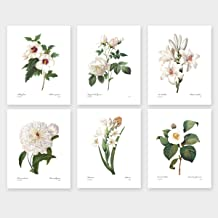 redoute botanical prints