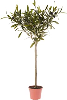 Décor Villa DBOT65312 Artificial Olive Topiary