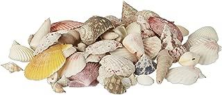 Relaxdays Pack de Conchas Marinas Pequeño para Decoración o Manualidades, Conchas Verdaderas, Multicolor, 500 g