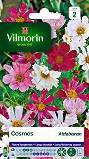 Vilmorin 5248842 Pack de Graines Cosmos Aldebaran Pétales Tubules