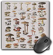3dRose Mouse Pad Illustration of Mushrooms - 8 by 8-Inches (mp_307846_1)