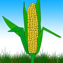 How Indian Corn Came Into the World
