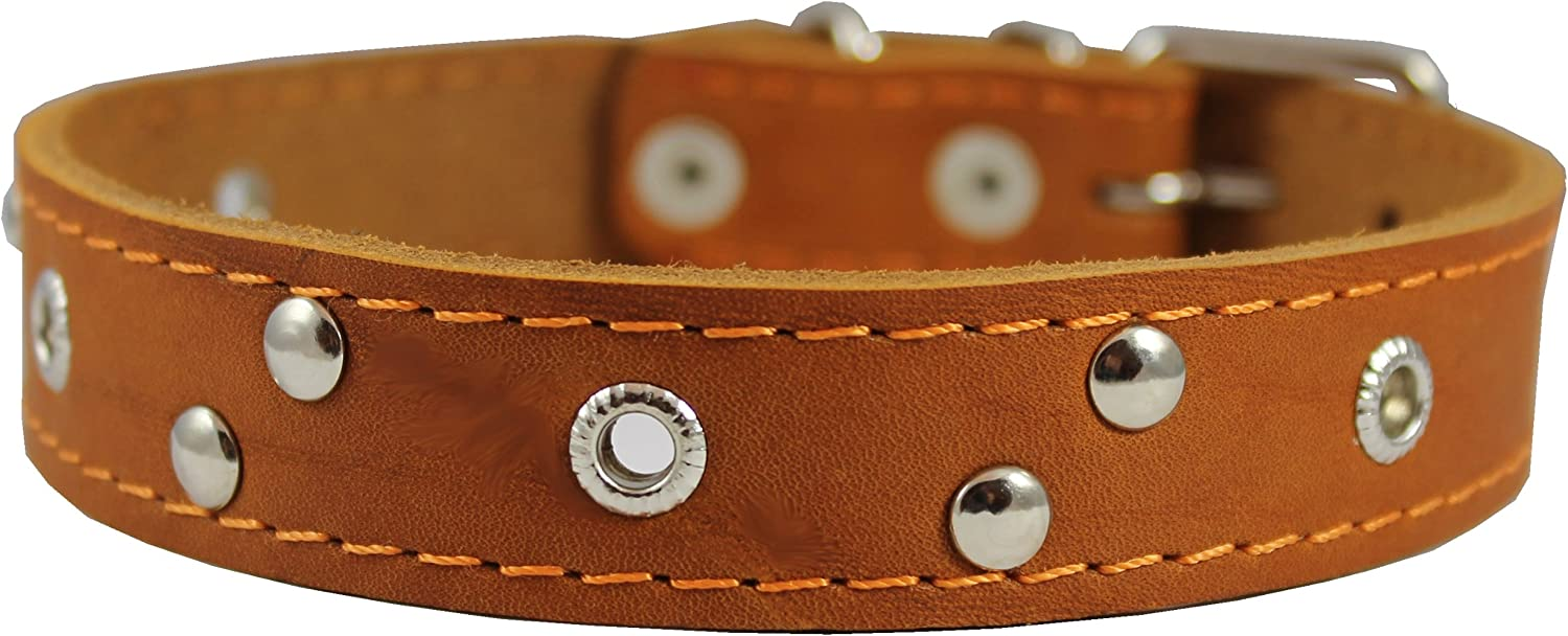 Genuine Leather Studded Dog Collar, Tan, 1  Wide. Fits 13 17.5  Neck Size