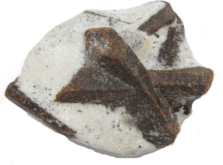 Fundamental Rockhound Products: Staurolite 海外輸入 Matrix Schist Mica on 値下げ