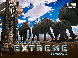 animal planet extreme countdown