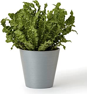 LA JOLIE MUSE 8 Inch Outdoor Planter - Flower Pot for Indoor and Outdoor Plants, Minimalist Tapered Shape Planter with Tex...
