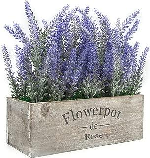 Best indoor lavender plant Reviews