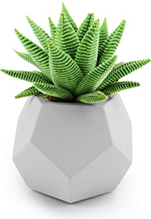 Slice of Goodness Geometric Succulent Planter Pot - Small Smooth Cement Plant Pots for Succulents and Cactus Plants - Plan...
