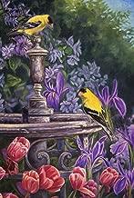 Best goldfinch x greenfinch Reviews