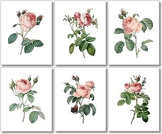 Vintage Pink Roses Botanical Prints - Flower Wall Art - (Set of 6) - 8x10 - Unframed - Floral Decor