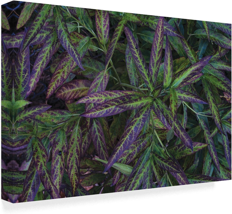 Trademark Fine Art KS01390C1219GG Milkweed Leaves by Kurt Shaffer 12  x 19  Fine Art, 12x19Inch, Multicolor