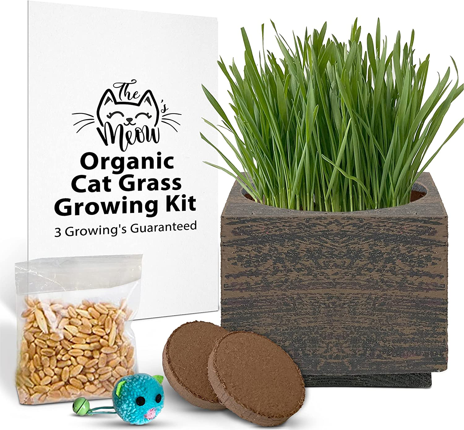 Organic Cat Grass Seeds Kit - Under blast sales 3 Soil Our shop most popular for Growing' Seed