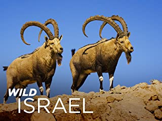 Wild Israel - Season 1